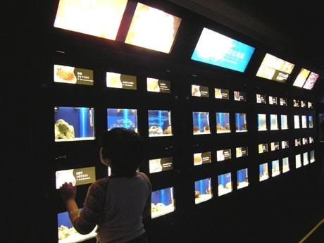 発見の小窓「小さな地球」水槽で2007年の運勢を発見!