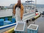 湘南の春の風物詩、「シラス漁解禁」で地元網元が出漁-今年も豊漁を期待