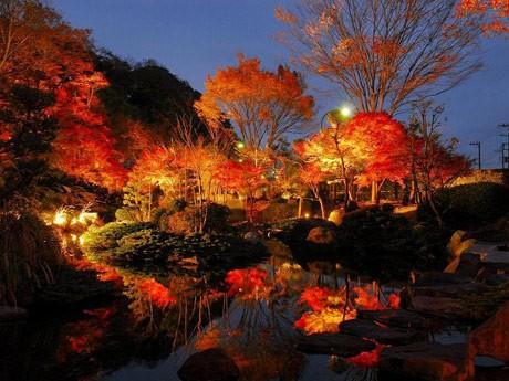不動池に浮かび上がる真っ赤な紅葉のライトアップ。竹林のグリーンと併せて幻想的な景観を楽しめる。