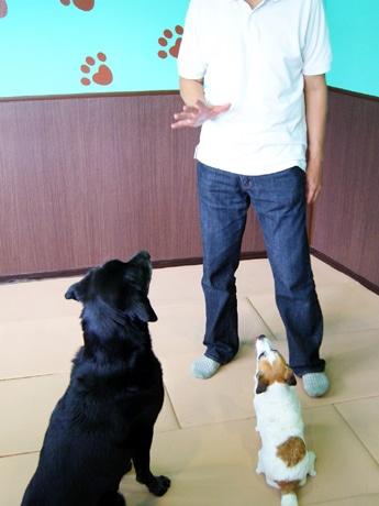 湘南初というわんこの学童保育「パル湘南」。しつけから介護支援まで行う