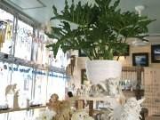 片瀬江ノ島駅そばに「風」がテーマの雑貨店-五感で感じる店作り