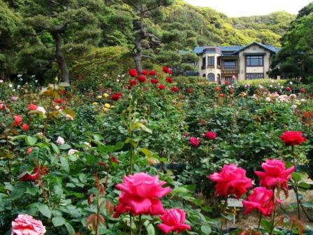 見頃を迎えたバラ園と鎌倉文学館本館