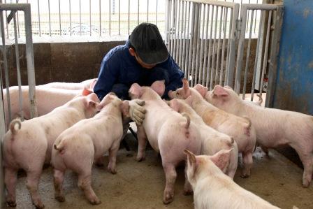 藤沢の養豚農家、地元特産品などを個別配送-牛乳販売店とタッグ