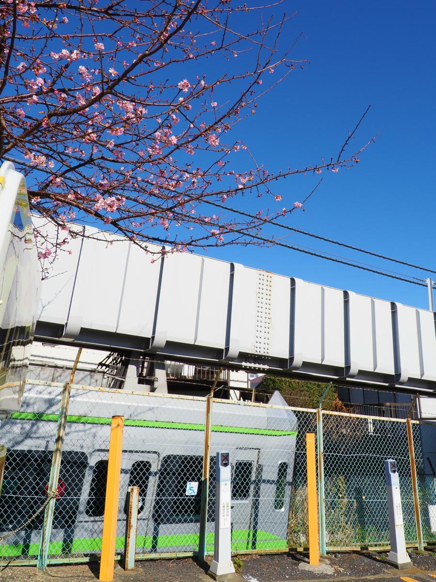 すでに4~5分咲きとなっている河津サクラと勝たせ山駅に到着するサクラサク号
