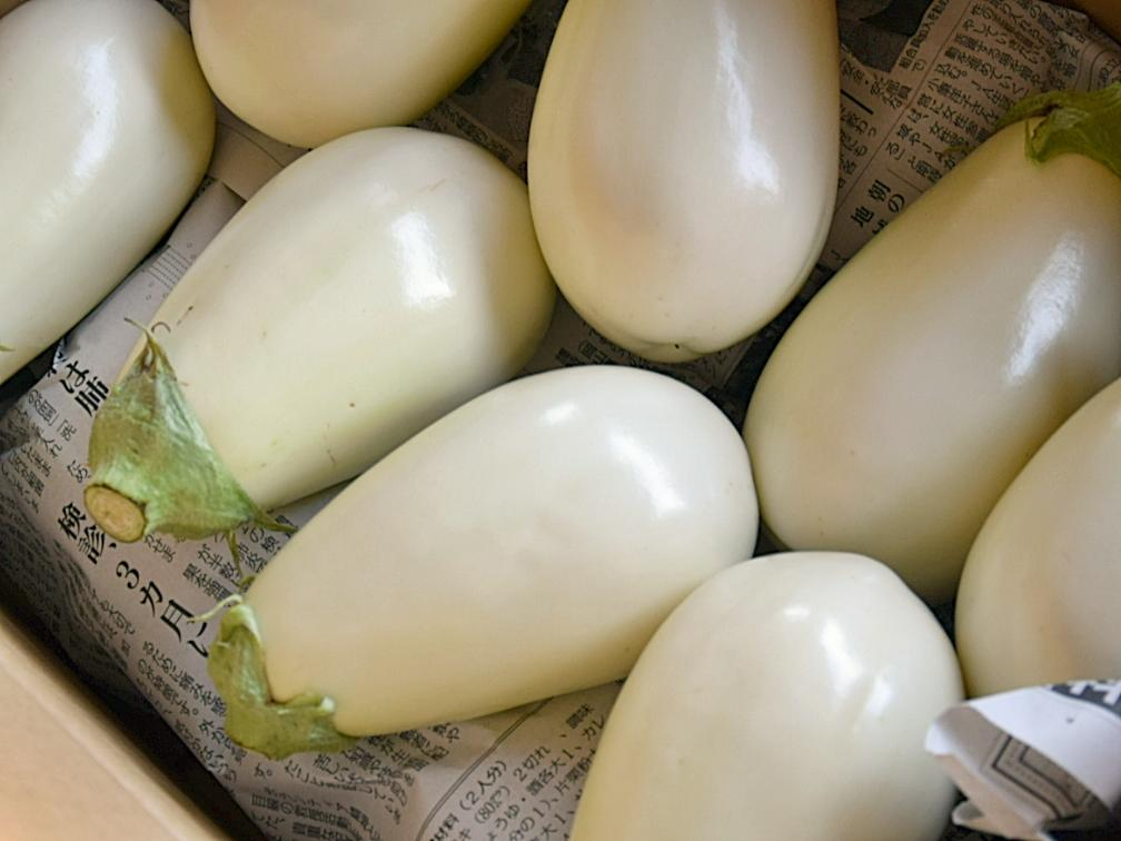 茅ヶ崎の白いナス「トルコナス」は、色が白くて丸みを帯びているのが特徴
