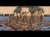 湘南ゆかりの浮世絵展覧会−茅ヶ崎美術館で