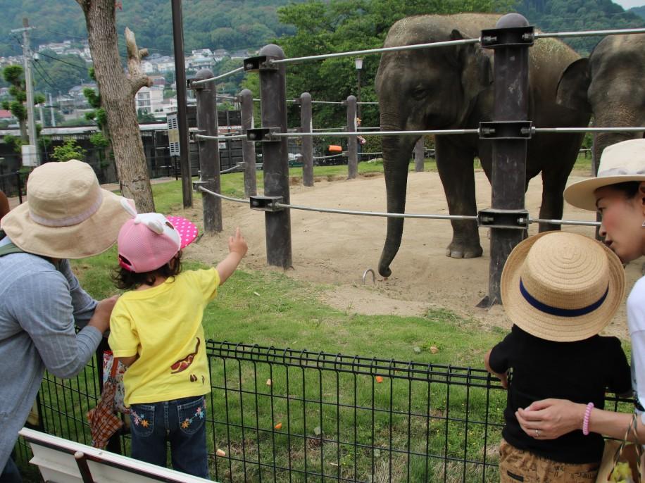 徳山動物園で「スリランカ豪雨災害義援金」呼び掛け ゾウのえさやり体験で寄付も