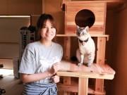 光市の猫カフェで「2代目ねこ店長」総選挙 10匹がエントリー、2周年記念企画で