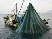 周南でイワシ漁見学ツアー 煮干し加工所の見学も