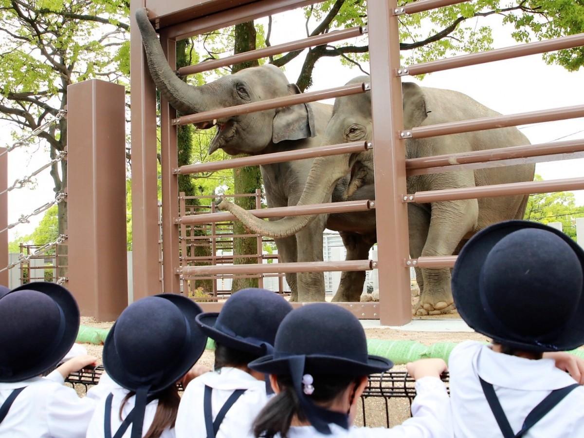 ゾウに歓声を上げる園児ら