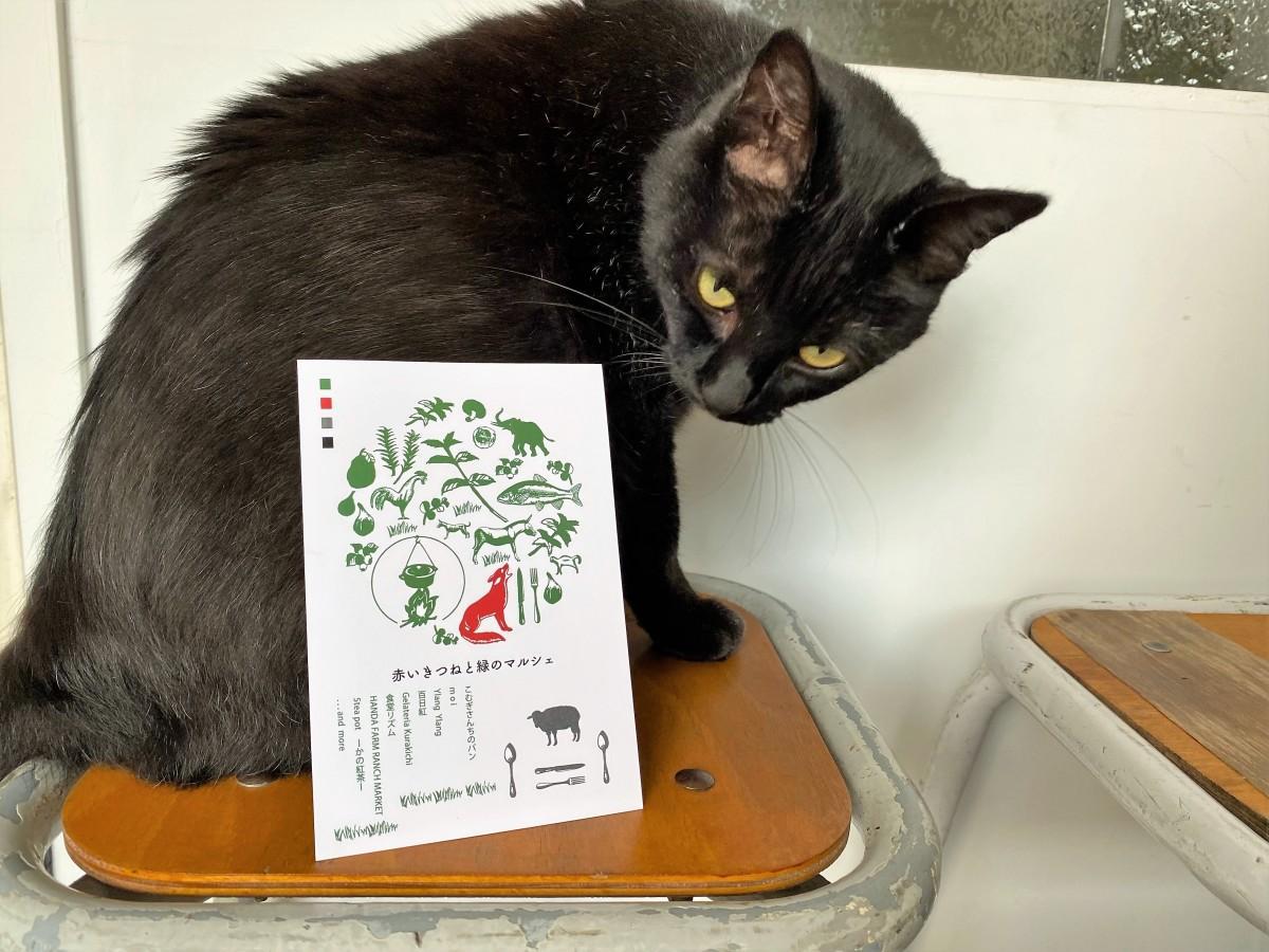 アパレル店「Droite」の看板猫とイベントフライヤー