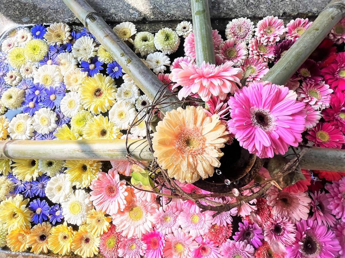 山崎八幡宮の花手水