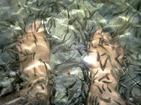 脚の角質を食べる小魚