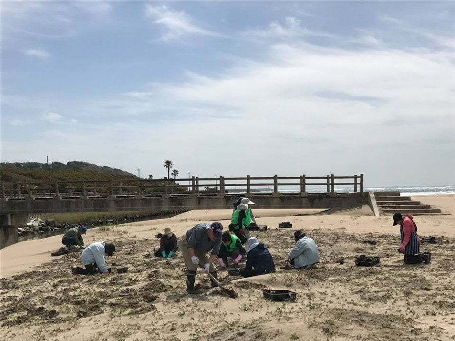 月見草を植えるボランティア