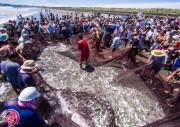 外房・一宮町の海岸で「地曳網」体験 捕れた魚無料配布
