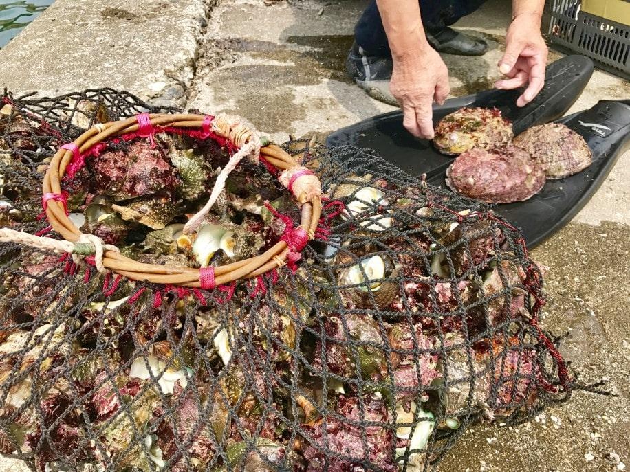 御宿でサザエ漁解禁 初日は海士が4時間素潜り