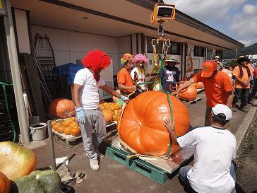 外房・鴨川で「ジャンボかぼちゃコンテスト」 優勝カボチャ300キロ超え