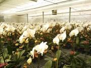 コチョウランで障がい者雇用を促進 NPOと上場企業が合并会社設立