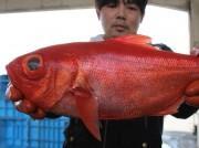 御宿・岩和田漁港で「釣りキンメ祭り」 地域ブランド認定キンメダイの販売も