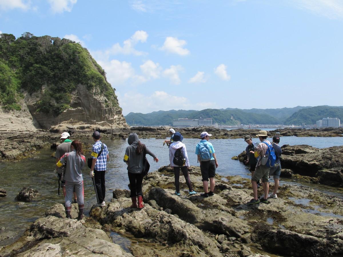 岩礁帯の海洋生物の観察