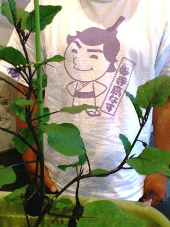 「めざせ、中央市場!寺島なす復活プロジェクト」はこれまでさまざまな機会に「なす苗配布」を行っている。現在、東向島駅そば、東武線の高架下で「寺島なす」を栽培中。最新情報は「玉ノ井カフェ」前の掲示板かブログで。