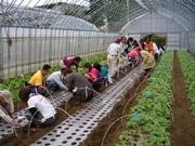 独身女性を対象に「農業体験」イベント-農業独身男性との交流も