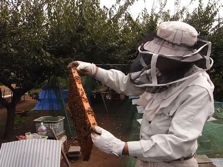 国立で養蜂に取り組む元国立市長の佐伯さん
