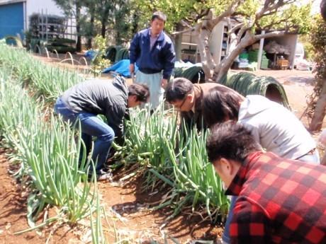 農園主の豊泉さんの指導のもと、ワケネギを収穫する様子