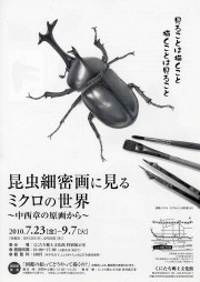 国立で昆虫細密画の原画展-サイエンスイラストレーター・中西章さん描く