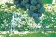 立川の農園で「ジャズ・サックスと野菜カクテルの夕べ」