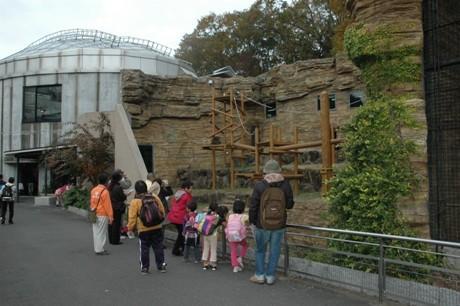 2011年12月に実施した「大人のための動物園」の様子。 オランウータンとにらめっこ状態に。