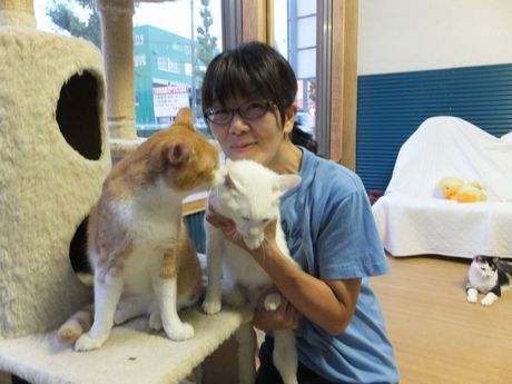佐藤さんと保護中の猫たち