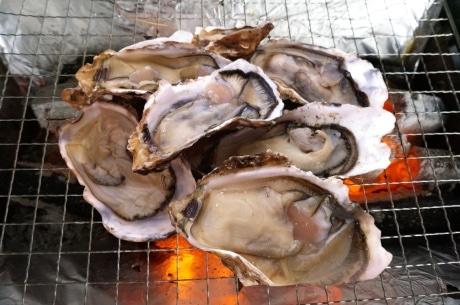 「かき小屋」では、殻つきの新鮮なカキが提供される