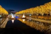 昭和記念公園で「Winter Vista Illumination」 点灯セレモニーや花火打ち上げも