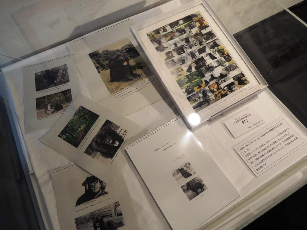 カラフト犬・タロの晩年の写真展示も。画像提供:国立極地研究所