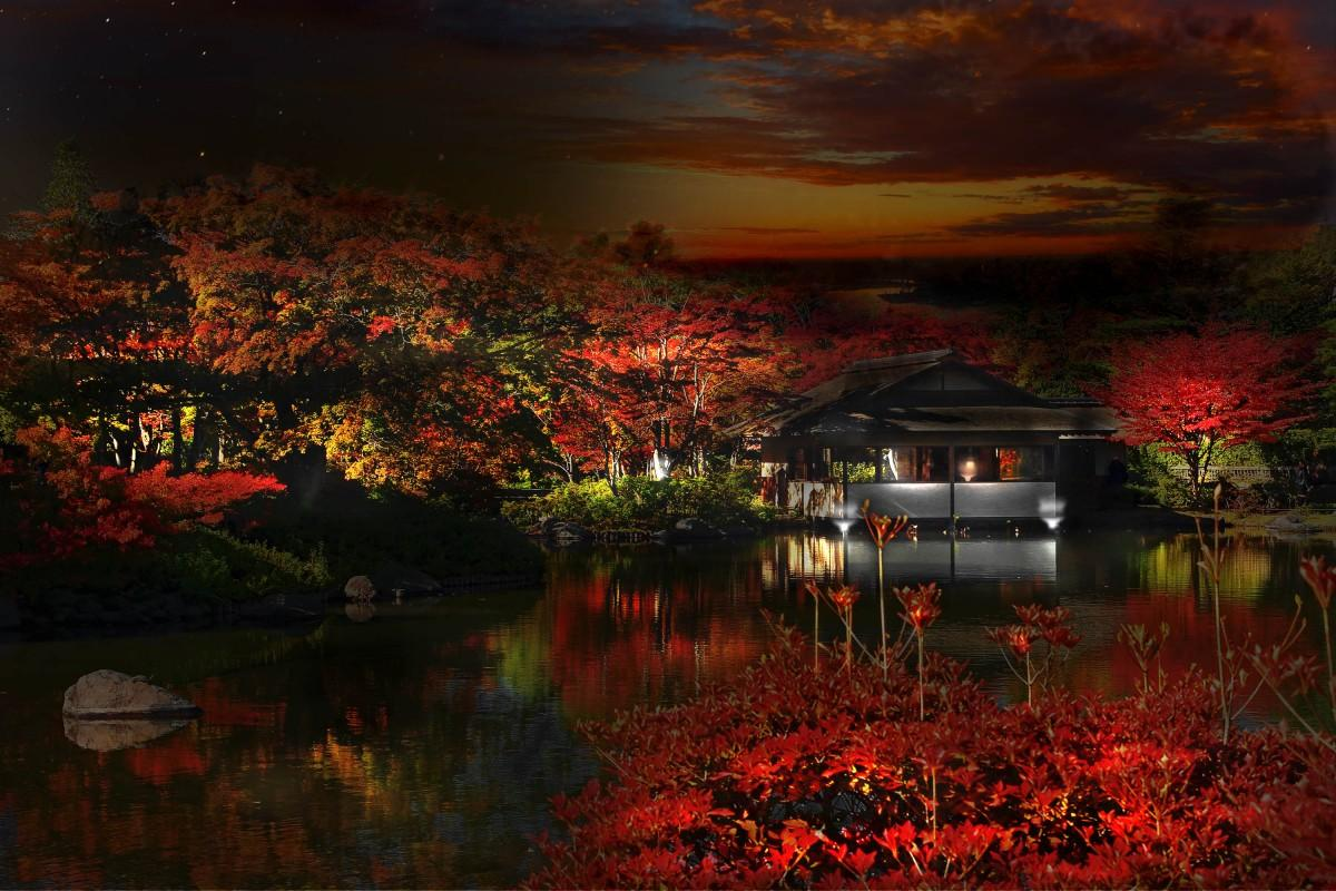 ライトアップされた「日本庭園」イメージ