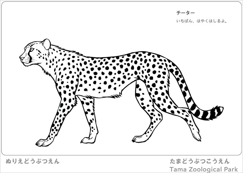 31種類の動物や昆虫の線画がダウンロードできる