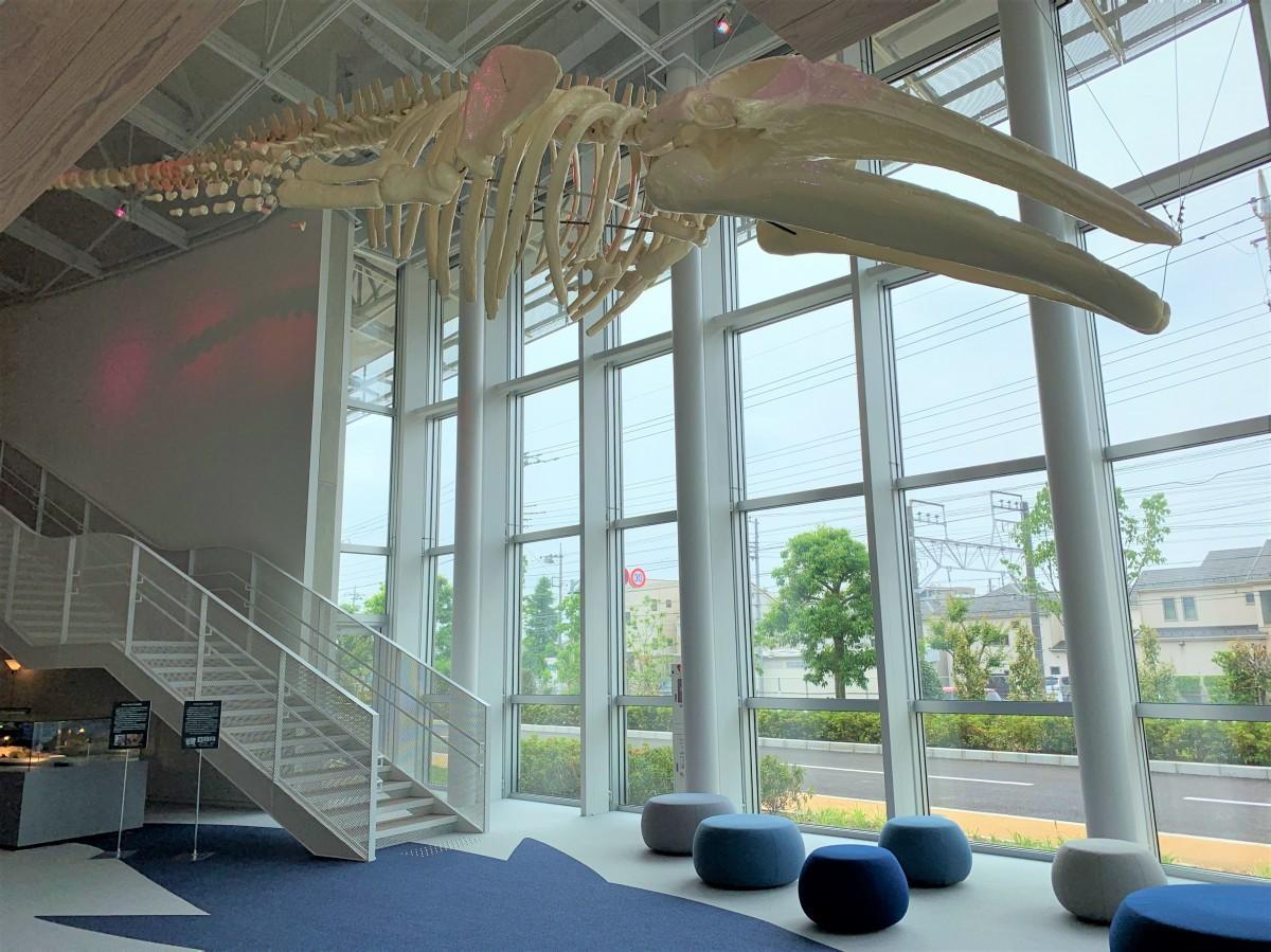 全長13.5メートルのアキシマクジラの原寸大化石レプリカ