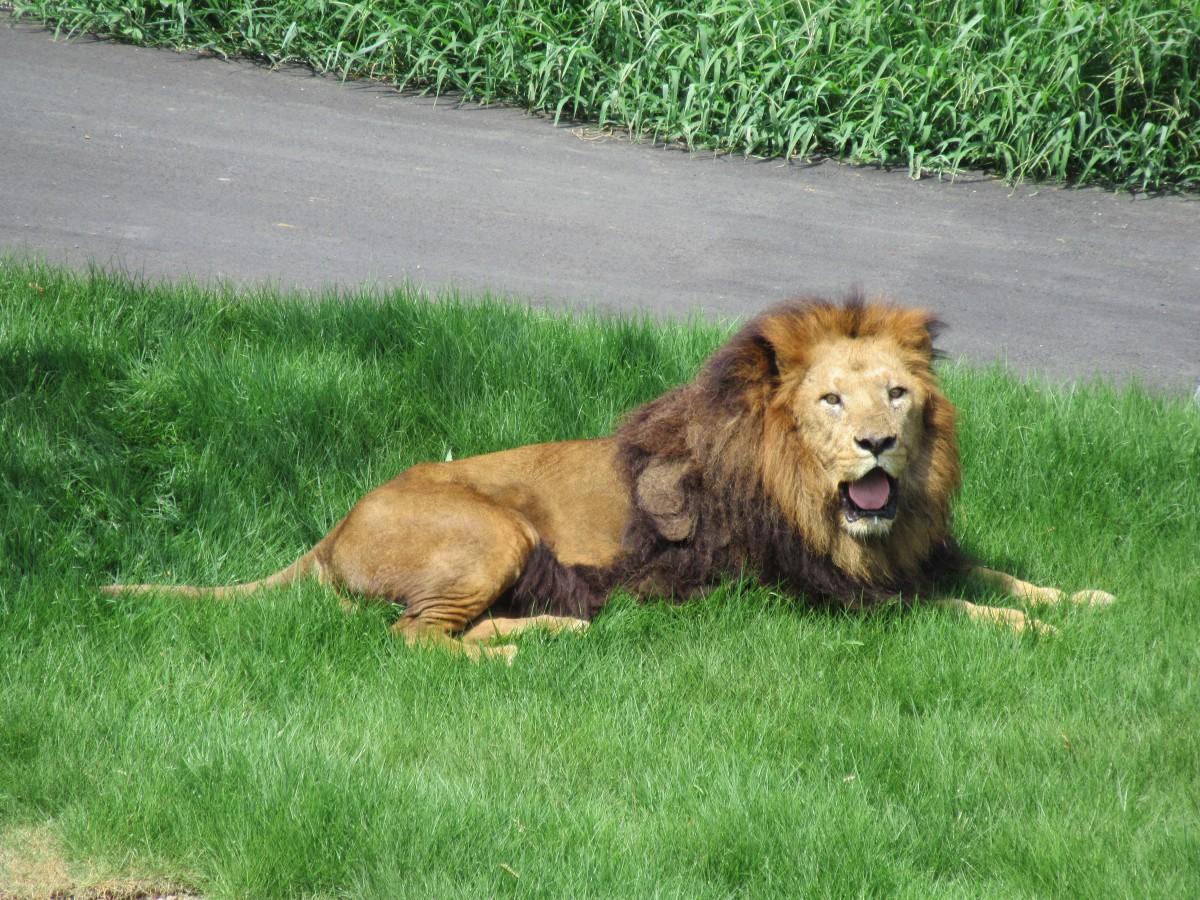 写真提供:(公財)東京動物園協会