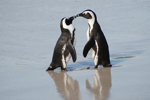 21日にはペンギンの「お散歩タイム」も