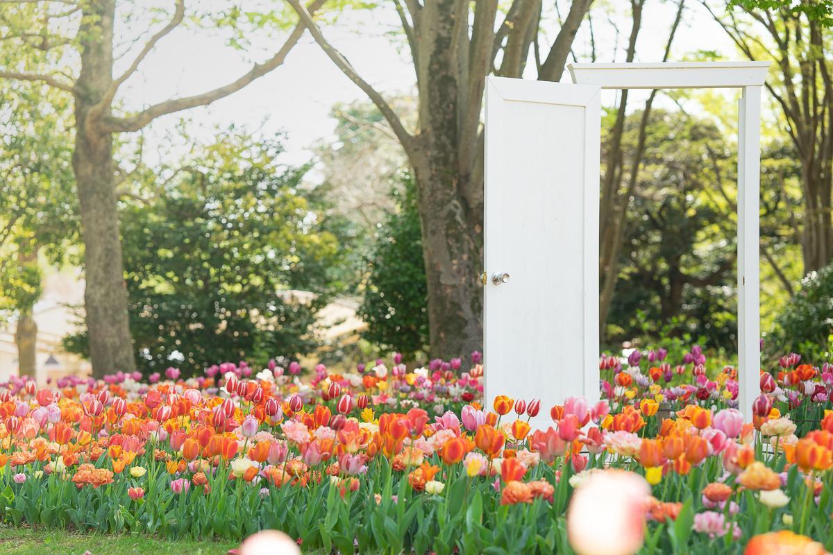 チューリップ畑が満開 「インスタ映え」で話題になったドアも各所に