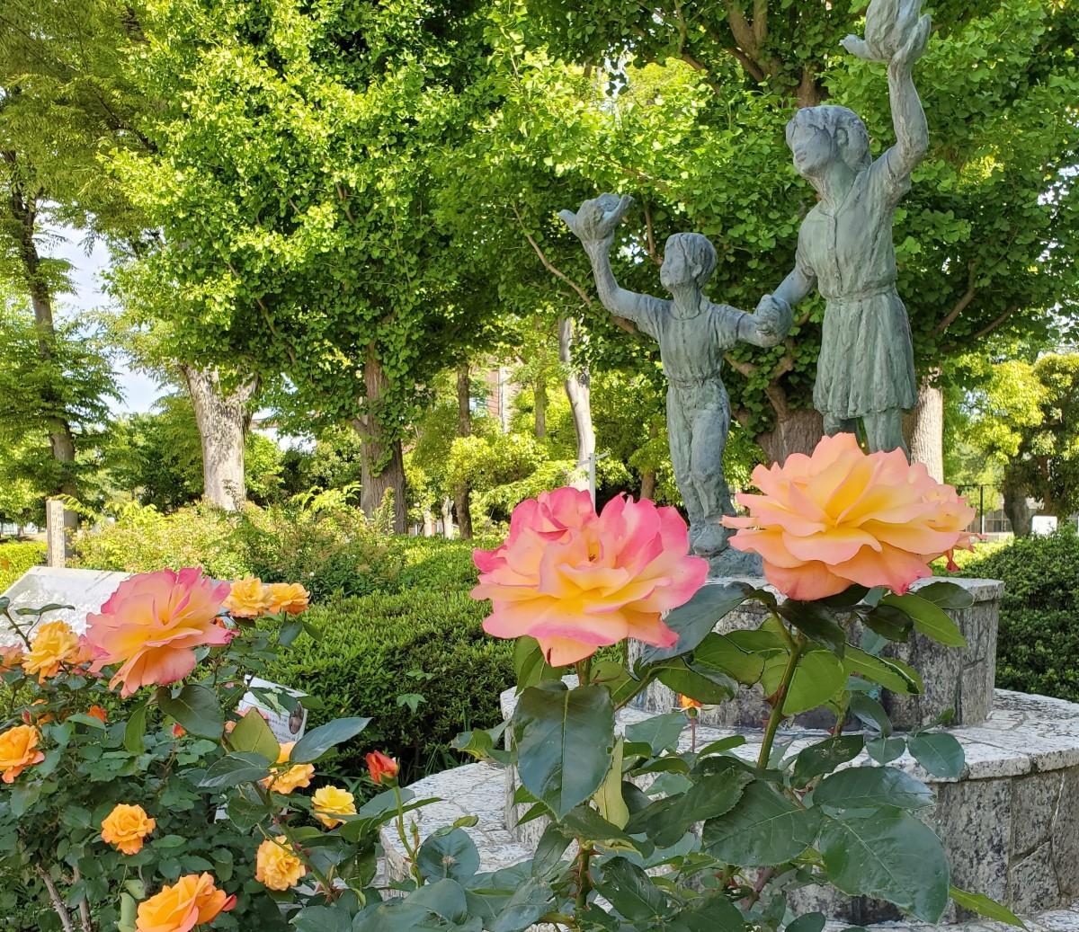 国立市役所西側広場にある平和記念の所に咲いている「アンネのバラ」