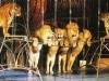 木下大サーカスが12年ぶりの立川公演-25万人の観客動員見込む