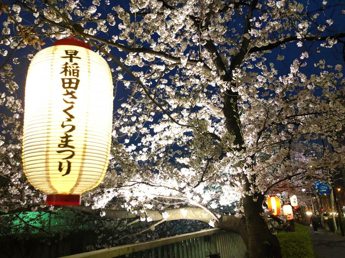「早稲田さくらまつり」のちょうちんとライトアップされた遊歩道
