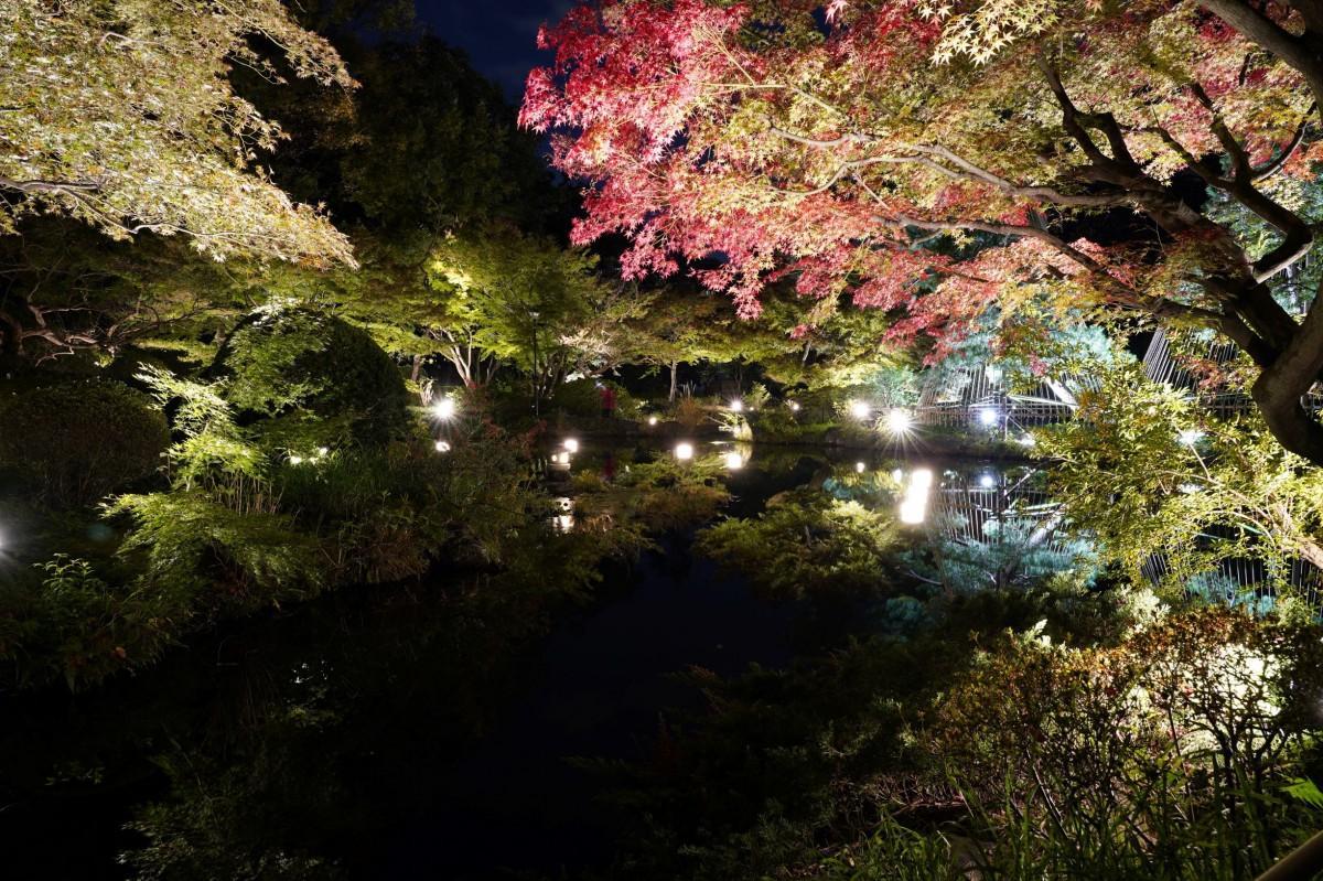 「早稲田燈幻郷」ライトアップされた甘泉園公園日本庭園