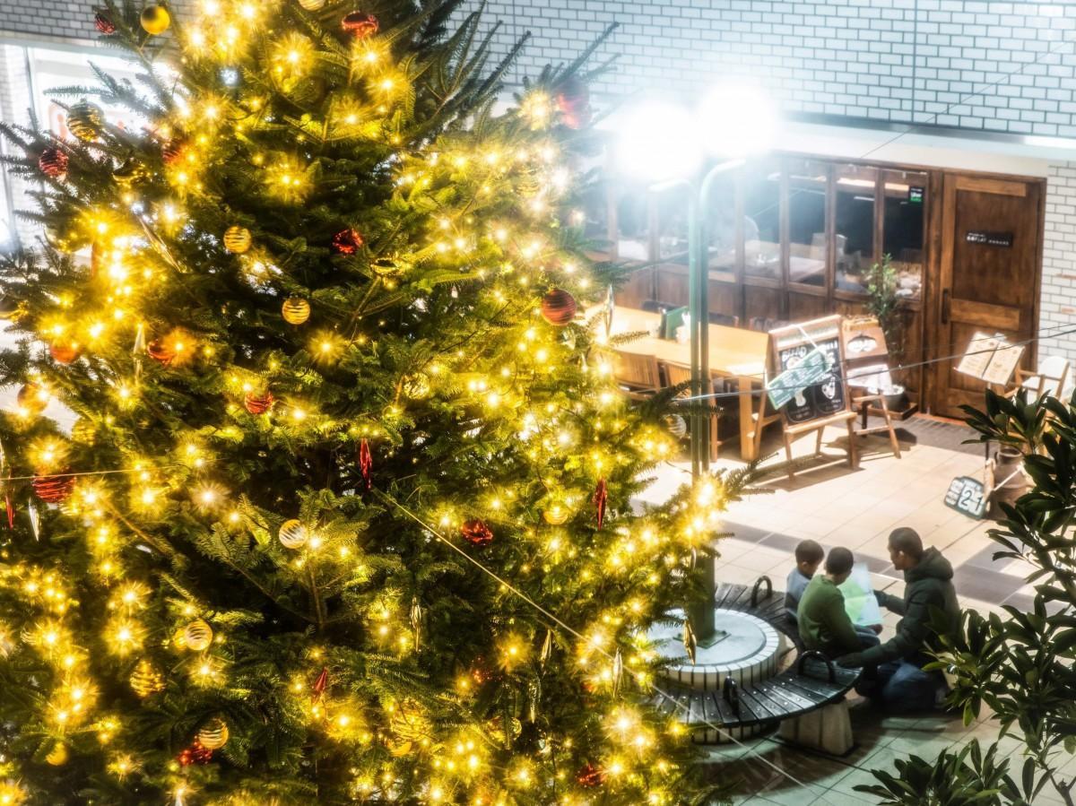 オレンジコートショッピングセンターのモミの木(生木)のクリスマスツリーライトアップ