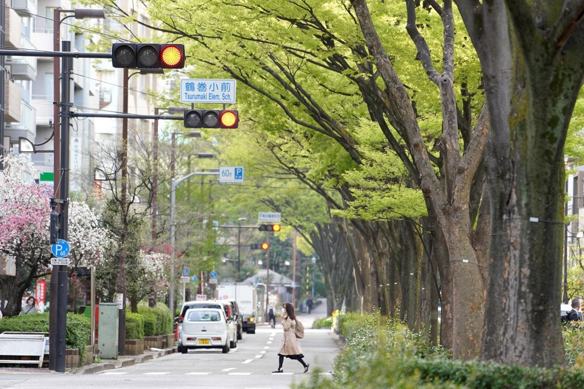 早大通りのシンボルになっているケヤキ並木の様子