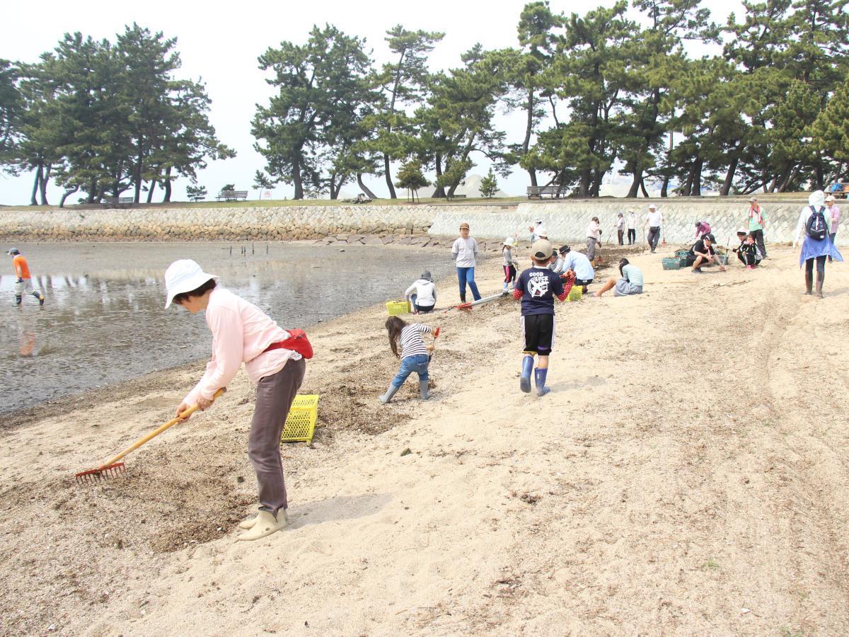浜を掃除する参加者