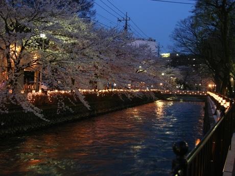 飲食店も多いエリアなので夜桜見物に訪れる人も多いようだ