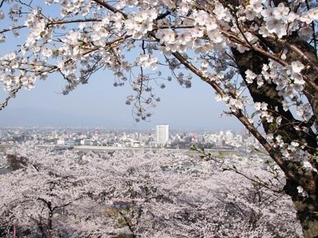 高崎観音山から市街地を望む。中央のビルが高崎市庁舎